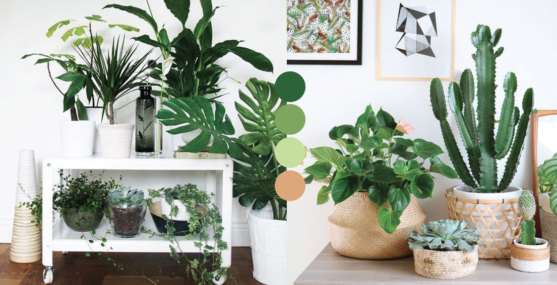 Bonjour Chiara: The Best Plants For Indoor - www.bonjourchiara.com